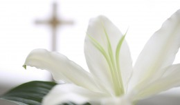 04 Mar 2004 --- White Flower near Christian Cross --- Image by © Royalty-Free/Corbis